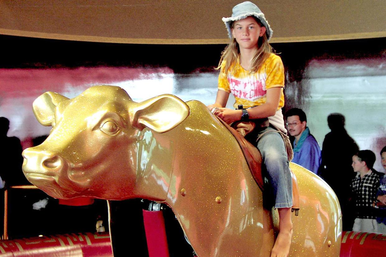 Bullriding Goldkalb
